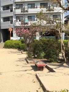 忍ケ丘遅咲きの桜