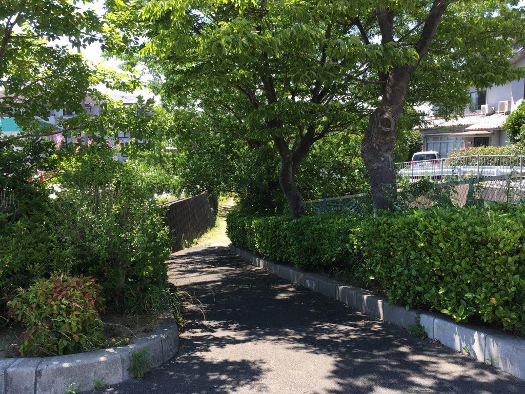 忍ケ丘のとある川沿いの道